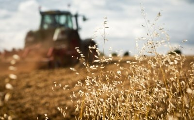 המחוברים למשק החקלאי - מה דינם במקרה של מות הבעלים? - תמונת כתבה