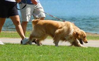 משמורת והסדרי ראייה לכלבה - תביעת בן הזוג לשעבר נדחתה