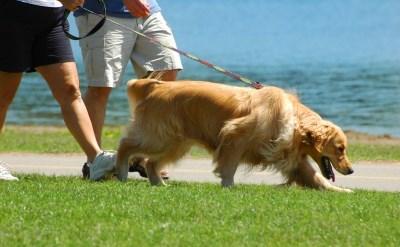 משמורת והסדרי ראייה לכלבה - תביעת בן הזוג לשעבר נדחתה - תמונת כתבה