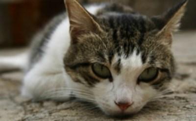מאסר בפועל של 21 חודשים לרוצח חתולים - תמונת כתבה