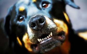 נשך אותי כלב - מה עלי לעשות?