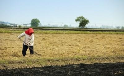 עובד זר בשדה - תמונת כתבה