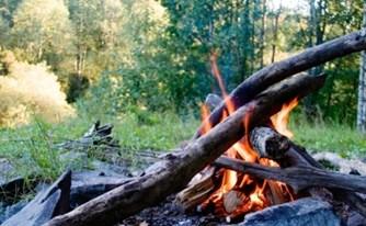 השריפה ביערות הכרמל - על הנזקים וההשלכות