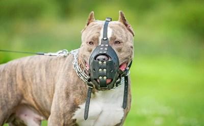 הפיצוי שניתן בגין נשיכות כלבים ואחריות בעלי הכלבים - תמונת כתבה