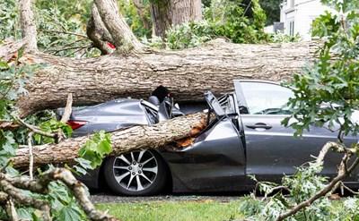 עץ שהתרסק על מכונית, מפגע - תמונת כתבה
